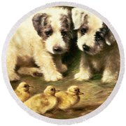 Sealyham Puppies And Ducklings Round Beach Towel by Lilian Cheviot