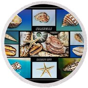 Seashell Collection 2 Round Beach Towel