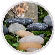 Seashell In The Garden Iv Round Beach Towel