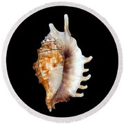 Seashell Lambis Digitata Round Beach Towel