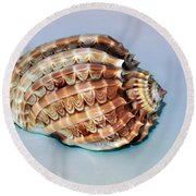 Seashell Wall Art 9 - Harpa Ventricosa Round Beach Towel