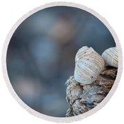 Seashells On Driftwood  Round Beach Towel