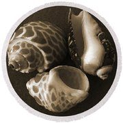 Seashells Spectacular No 1 Round Beach Towel by Ben and Raisa Gertsberg