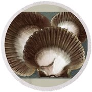 Seashells Spectacular No 22 Round Beach Towel