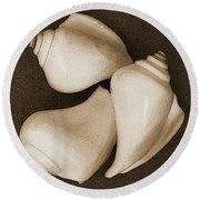 Seashells Spectacular No 4 Round Beach Towel