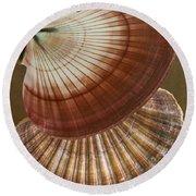 Seashells Spectacular No 53 Round Beach Towel