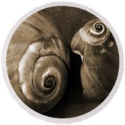 Seashells Spectacular No 6 Round Beach Towel