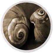 Seashells Spectacular No 6 Round Beach Towel by Ben and Raisa Gertsberg