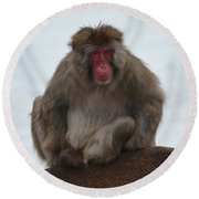 Seated Macaque Snow Monkey Round Beach Towel