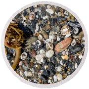 Seaweed And Shells Round Beach Towel