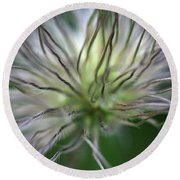 Seed Head Round Beach Towel