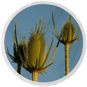 Seed Heads Reach For The Sky Round Beach Towel