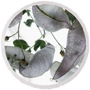 Seed Pods Round Beach Towel