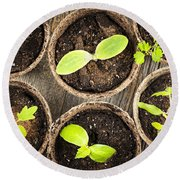 Seedlings Growing In Peat Moss Pots Round Beach Towel