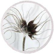 Seeds Round Beach Towel by Anne Gilbert