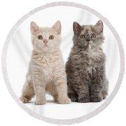 Selkirk Rex Kittens Round Beach Towel