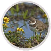 Semi-palmated Plover Pictures 44 Round Beach Towel