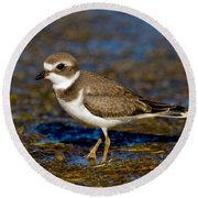 Semipalmated Plover Round Beach Towel