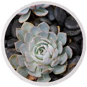 Sempervivum Round Beach Towel