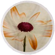 Senetti Pericallis Orange Tip Round Beach Towel