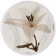Sepia Lily In Snow Round Beach Towel