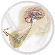 Serotonin Released In The Brain Travels Round Beach Towel
