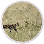Serval Hunting Round Beach Towel