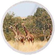 Seven Masai Giraffes Round Beach Towel