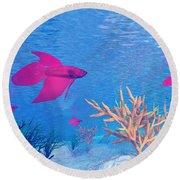 Several Red Betta Fish Swimming Round Beach Towel