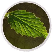 Shadows And Light Of The Leaf Round Beach Towel