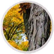 Shagbark Hickory Tree Round Beach Towel
