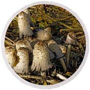 Shaggy Ink Caps - Coprinus Comatus Round Beach Towel