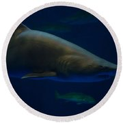 Shark On Station Round Beach Towel