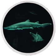 Sharks-09433 Round Beach Towel