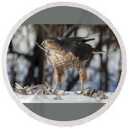 Sharp-shinned Hawk And Feather Round Beach Towel