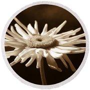 Shasta Daisy Flower Sepia Round Beach Towel