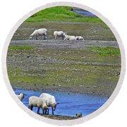 Sheep In Branch-nl Round Beach Towel