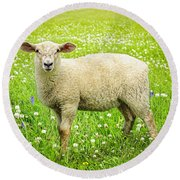 Sheep In Summer Meadow Round Beach Towel