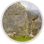 Sheep On A Mountain Pasture Between Granite Rocks Round Beach Towel