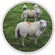 Sheep On Parade Round Beach Towel
