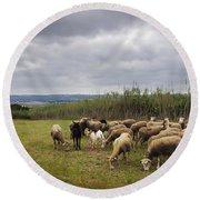 Sheep Pasturing Round Beach Towel