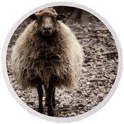 Sheep Stare Round Beach Towel