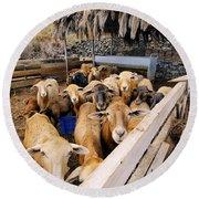 Sheeps Enclosure Round Beach Towel