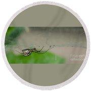 Sheet Web Weaver Spider Round Beach Towel