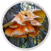 Shelf Fungus In Carl E. Wynn Nature Center In Homer-ak   Round Beach Towel