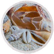 Shell Collectors Dream Round Beach Towel
