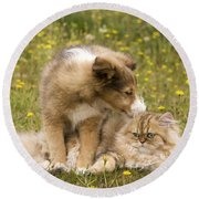 Sheltie Puppy And Persian Cat Round Beach Towel