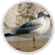 Shore Bird Round Beach Towel