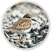 Shorebird Beauty Round Beach Towel