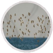 Shorebirds Flying Round Beach Towel